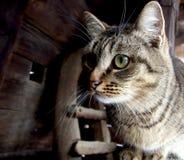 Retrato de un gato Imágenes de archivo libres de regalías