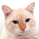Retrato de un gato Fotos de archivo libres de regalías