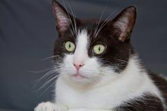 Retrato de un gato imagenes de archivo