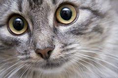 Retrato de un gato Foto de archivo