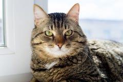 Retrato de un gato Imagen de archivo
