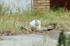 Retrato de un gato bastante blanco que descansa en el piso Imagen de archivo