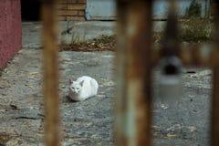 Retrato de un gato bastante blanco que descansa en el piso Fotografía de archivo
