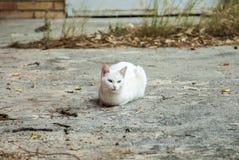 Retrato de un gato bastante blanco que descansa en el piso Imagenes de archivo