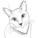 Retrato de un gato con un movimiento negro en un fondo blanco foto de archivo libre de regalías