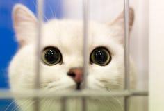 Retrato de un gato en una jaula Fotos de archivo