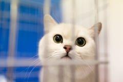 Retrato de un gato en una jaula Fotos de archivo libres de regalías