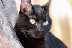 Retrato de un gato negro Imagen de archivo libre de regalías