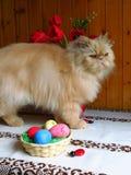 Retrato de un gato persa adulto que se sienta en la tabla de cocina foto de archivo
