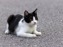 Retrato de un gato que descansa sobre la pista de despeque Fotografía de archivo