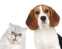 Retrato de un gato y de un perro fotos de archivo libres de regalías