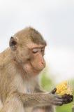 Retrato de un mono en fauna foto de archivo