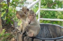 Retrato de un mono en fauna imagen de archivo