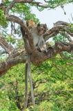 Retrato de un mono en fauna imagenes de archivo