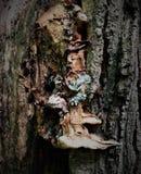 Retrato de un monstruo terrible en un árbol de abedul Imágenes de archivo libres de regalías