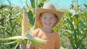 Retrato de un muchacho en un sombrero de paja y una camiseta anaranjada en un campo de maíz, niño que sostiene un maíz en su mano metrajes
