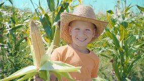 Retrato de un muchacho en un sombrero de paja y una camiseta anaranjada en un campo de maíz, niño que sostiene un maíz en su mano almacen de video