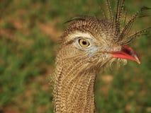 Retrato de un pájaro Foto de archivo libre de regalías