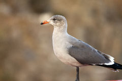 Retrato de un pájaro Fotos de archivo