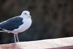 Retrato de un pájaro Imagen de archivo