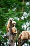 Retrato de un par de monos fotos de archivo