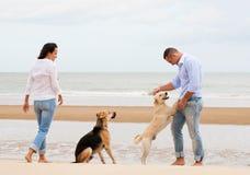 Retrato de un par feliz con los perros Imágenes de archivo libres de regalías