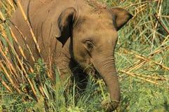 Retrato de un pequeño elefante que camina alrededor del parque imagen de archivo