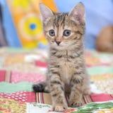 Retrato de un pequeño gatito lindo imagen de archivo
