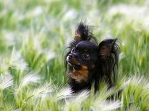 Retrato de un pequeño perro negro lindo en un estípite plumoso Fotografía de archivo