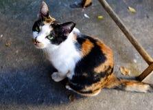 Retrato de un pequeño gato Fotografía de archivo