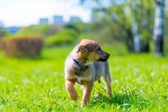 retrato de un perrito guardado en un fondo de la hierba verde fotos de archivo