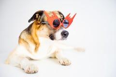 Retrato de un perro Fotografía de archivo