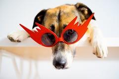 Retrato de un perro Imagen de archivo libre de regalías