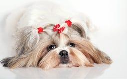 Retrato de un perro Imagen de archivo