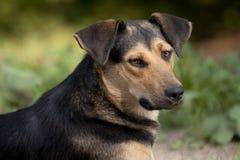 Retrato de un perro. Foto de archivo