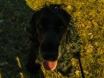 Retrato de un perro Foto de archivo