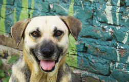 Retrato de un perro cerca de una pared Imagenes de archivo