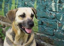 Retrato de un perro cerca de una pared Imagen de archivo