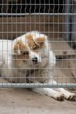 Retrato de un perro detrás de barras Imagen de archivo