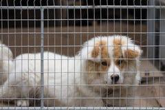Retrato de un perro detrás de barras Imagenes de archivo