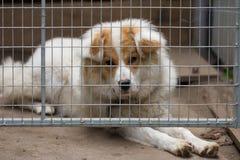 Retrato de un perro detrás de barras Imágenes de archivo libres de regalías