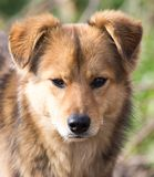 Retrato de un perro en la naturaleza Imagen de archivo