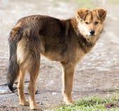 Retrato de un perro en la naturaleza Fotos de archivo libres de regalías
