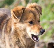 Retrato de un perro en la naturaleza Fotografía de archivo