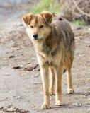 Retrato de un perro en la naturaleza Imágenes de archivo libres de regalías
