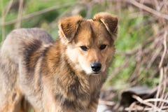 Retrato de un perro en la naturaleza Imagen de archivo libre de regalías