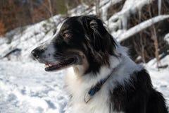 Retrato de un perro en nieve fotografía de archivo