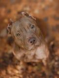 Retrato de un perro en un fondo de hojas Imagenes de archivo