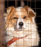 Retrato de un perro en una jaula Imagen de archivo