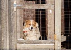 Retrato de un perro en una jaula Fotos de archivo libres de regalías